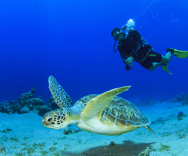 Best Reef Playa del Carmen