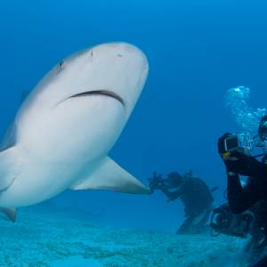 Shark Dive Playa Del Carmen