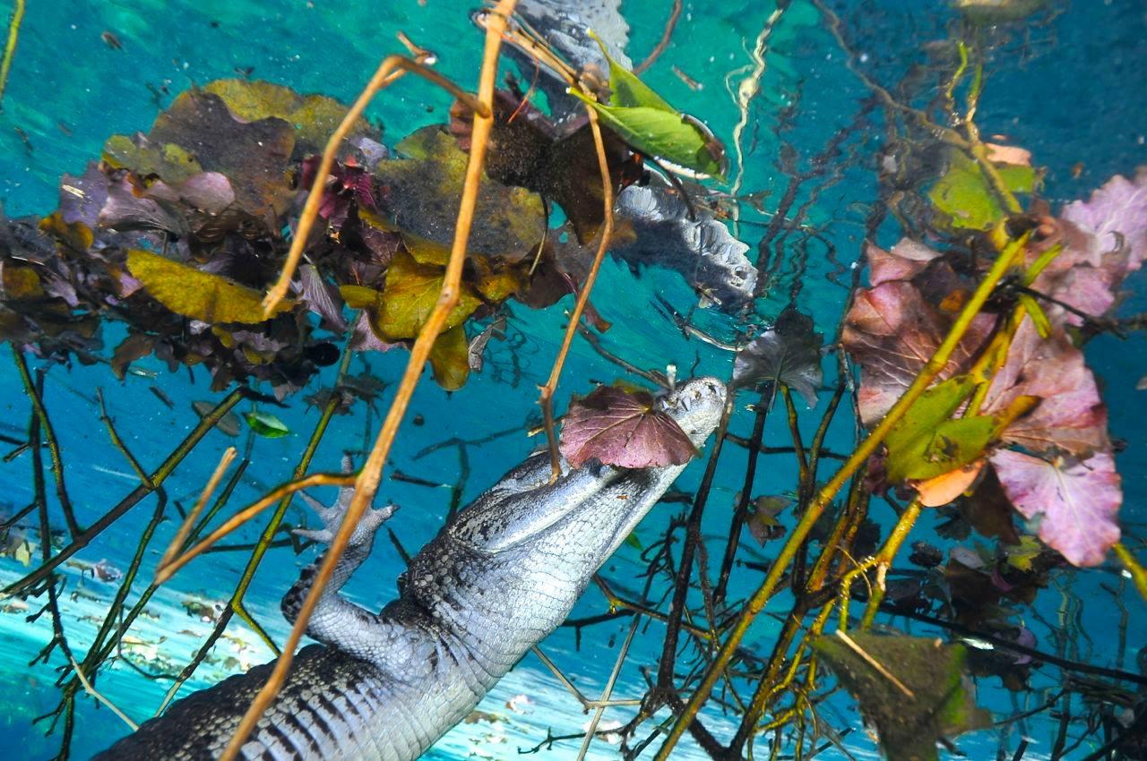 vista del cenote aktun ha
