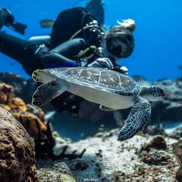 Diving in Cozumel from Playa